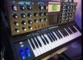 Moog Music Minimoog Voyager Anniversary 50th (59700)