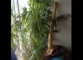 No Name Didgeridoo