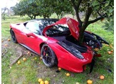 Ferrari in a tree