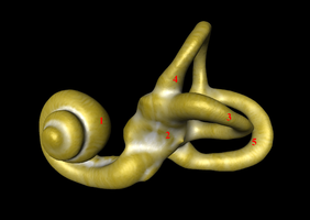 La loudness war et le système auditif