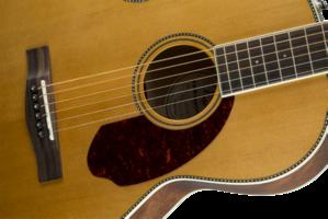 Fender PM-2 Standard Parlor : 0960252221 gtr frtbdydtl 001 nr