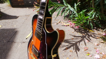 D'angelico EX-SS : D'angelico EX-SS (96239)