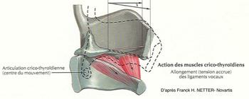 Le larynx