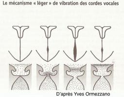 Mécanismes vibratoires de la voix