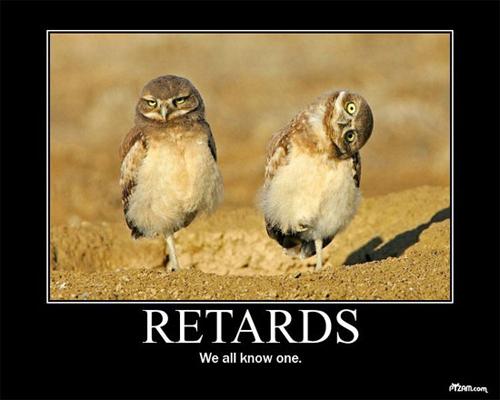 retard owls