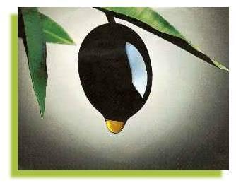 olive grossane