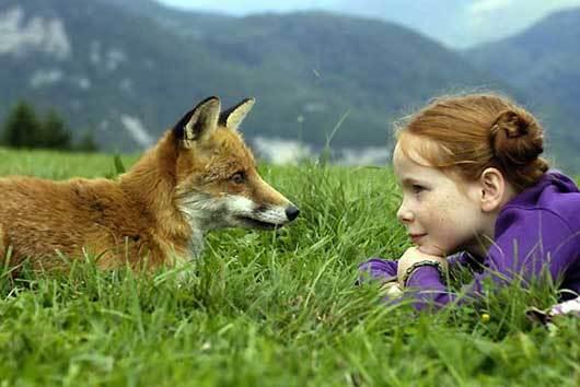 7982 renard enfant 14