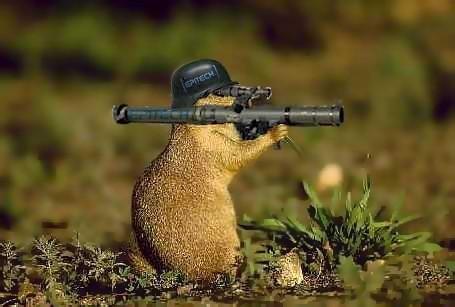 migoul 1120218439 marmotte de combat