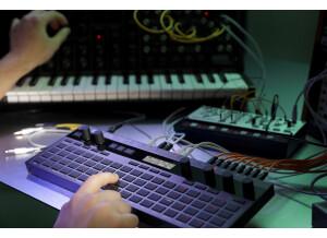 Acustica Audio Sienna Free